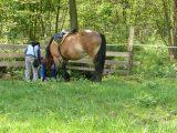 Napájení koní